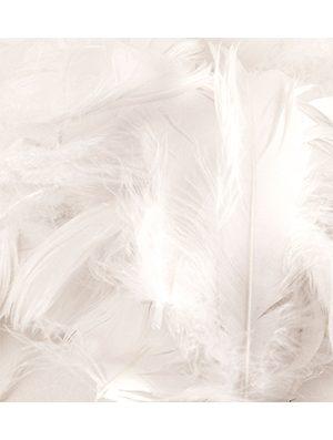 Plumas para Globos color blanco 8 gr.